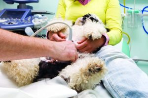 Ultrasound in Dogs/Pets (Types, Method, Detection, Uses, charges)
