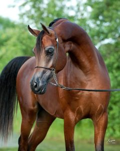 Horse Breeds/ Top 10 horse breeds (Beautiful horses and pics)