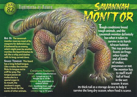 All you need to know about SAVANNAH MONITOR (The Beast PET)