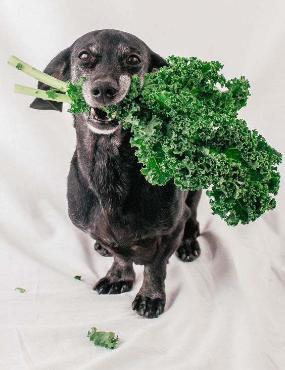 The Best High-Fiber Diet For Your Dog: A Good Digestion